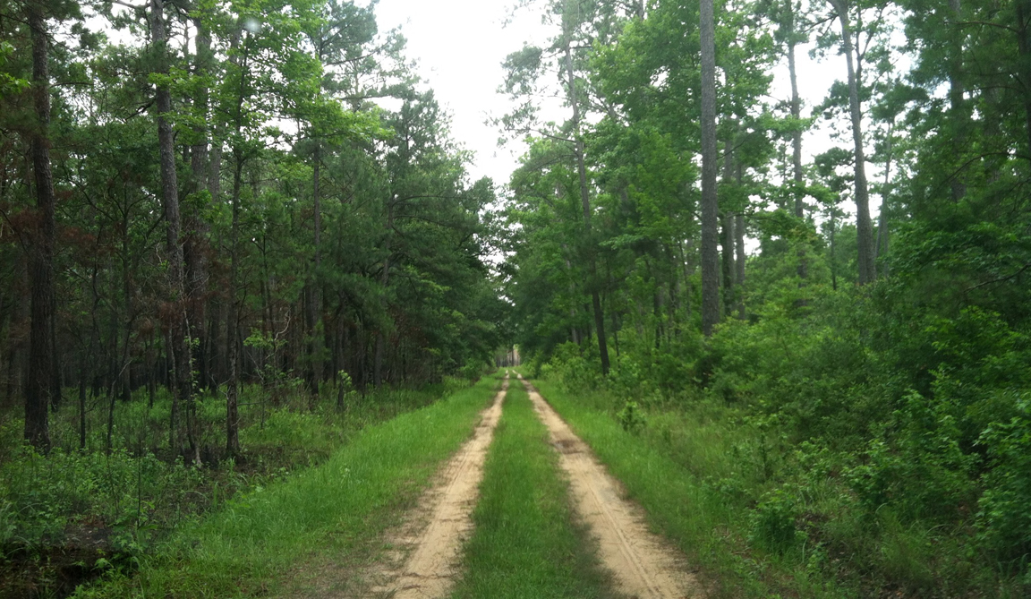 The King's Highway running through Hobcaw, looking much as it did in colonial times.